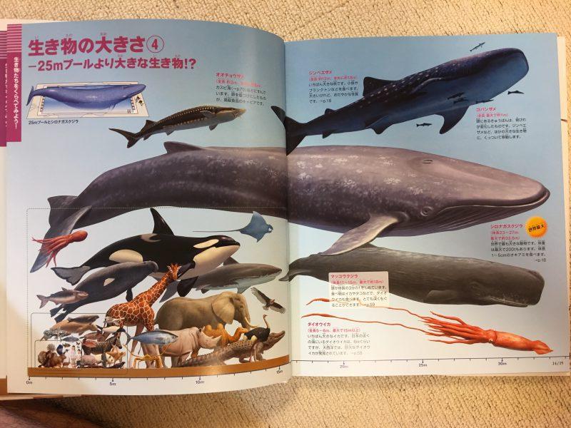 『小学館の図鑑NEO+ くらべる図鑑』生き物の大きさ4