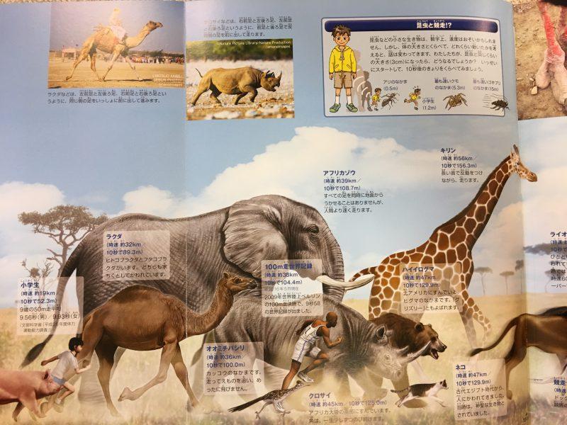 『小学館の図鑑NEO+ くらべる図鑑』走る速さをくらべるページ